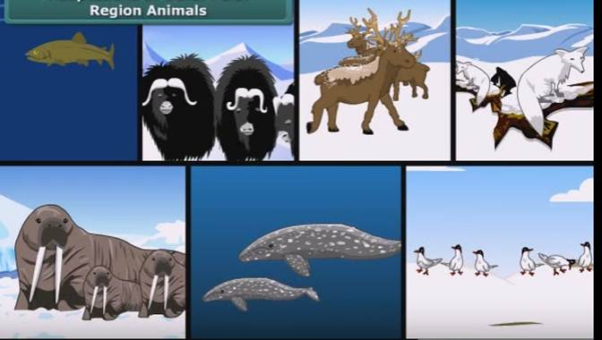 http://study.aisectonline.com/images/Know about Adaptations of Animals to Climate.jpg